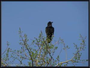 May9_16_Hike_NearHome_RavenRC