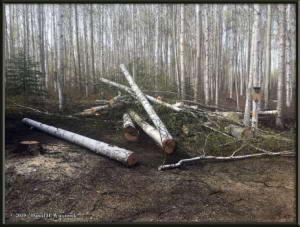 May3_01_TreesFelledAtHomeRC