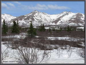 May11_03_DenaliNP_SceneryRC