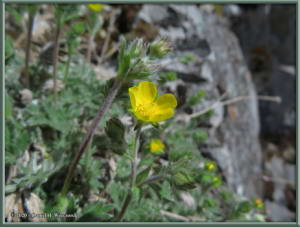 May20_29_Grpefruit_YellowFlowerRC