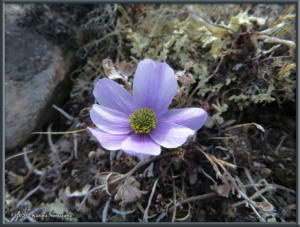 May24th_021_EagleSummit_AnemoneMulticepsRC