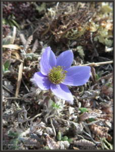 May24th_027_EagleSummit_AnemoneMulticepsRC