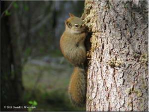 May23_47_UAF_SquirrelRC