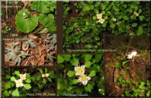 MtTakao2004marchCollage01a.jpg