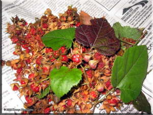 Winterberries01RC.jpg