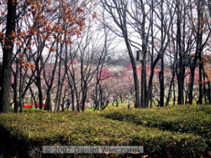 Feb17_BubaiPlumBlossom38aRC.jpg
