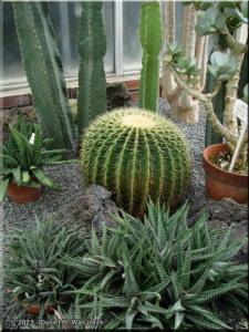 Feb02_JindaiBG_Cactus01RC.jpg