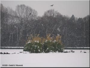 Feb03_JindaiBG_SnowyLawn06RC.jpg