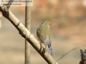 Feb11_NagaikePk_Bird39RC.jpg