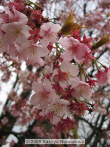 Feb15th_KoishikawaBG_22_CherryRC.jpg