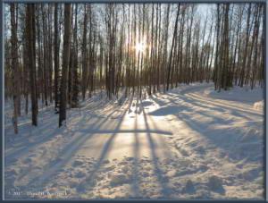 Feb07_1_SnowInTheYardRC