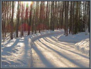 Feb07_5_SnowInTheYardRC