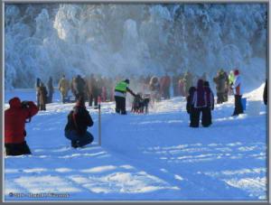 Feb3_08_YukonQuestStartRC