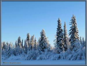 Feb3rd_005_YukonQuestRC