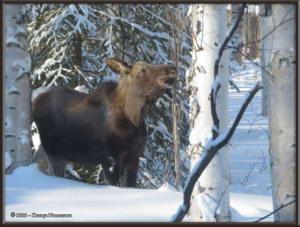 Feb15th_010_Moose_HomeRC