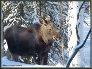 Feb15th_014_Moose_HomeRC