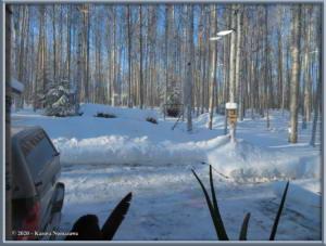 Feb15th_022_Moose_HomeRC