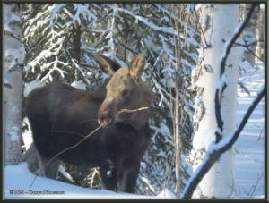 Feb15th_024_Moose_HomeRC
