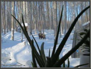 Feb15th_035_Moose_HomeRC