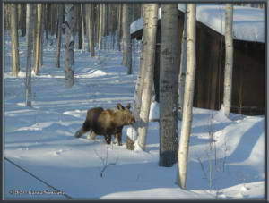 Feb15th_040_Moose_HomeRC