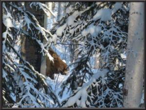Feb15th_045_Moose_HomeRC