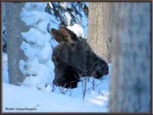 Feb15th_069_Moose_HomeRC