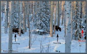 Feb15th_076_077_AutoPanorama_Moose_HomeRC