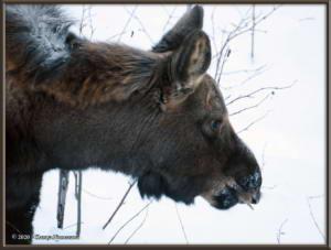 Feb15th_096_Moose_HomeRC