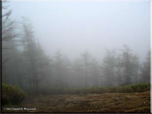 KumotoriTrees_Clouds05RC.jpg