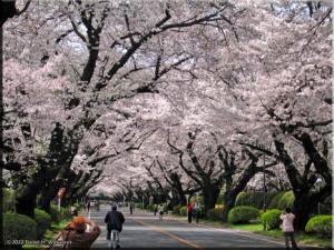 Apr1_ICU_Cherry03RC.jpg