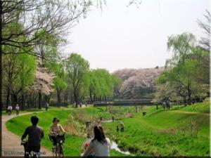 Apr1_NogawaPark03RC.jpg