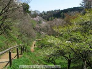 Apr10_TakaoSciGar49_CherryBlossomsRC.jpg