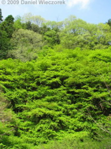 Apr24_MtNarukami003_SceneryRC.jpg