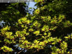 April10th_TamaForestScienceGarden003_MapleRC.jpg