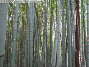April12th_Akigawa007_BambooForestRC.jpg