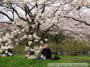 April5th_Nogawa_MusashinoPark31_CherryBlossomsRC.jpg