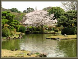 Apr10_KoishikawaBotGar_190_CherryBlossomsRC