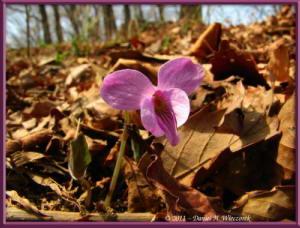 Apr17_Takamizu_056_Viola_rossiiRC