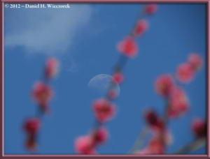 Apr01_134_Kogesawa_Moon_PlumBlossomsRC