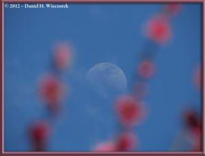 Apr01_136_Kogesawa_Moon_PlumBlossomsRC