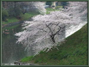 Apr06_04_ChidorigafuchiMoatCherryBlossomsRC