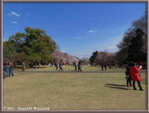 Apr06_135_ShinjukuGyoenPark_CherryBlossomsRC