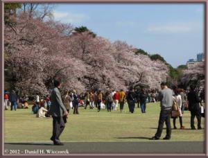 Apr06_136_ShinjukuGyoenPark_CherryBlossomsRC