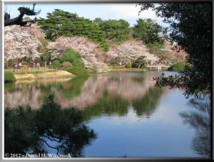 Apr06_209_ShinjukuGyoenPark_CherryBlossomsRC