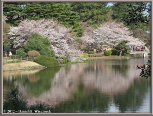 Apr06_211_ShinjukuGyoenPark_CherryBlossomsRC