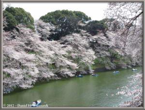 Apr06_53_ChidorigafuchiMoatCherryBlossomsRC