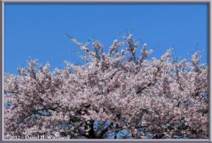 Apr28_003_KawaguchikoStationScenery_RC