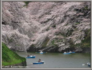 April6th_086_Chidorigafuchi_HanamiRC