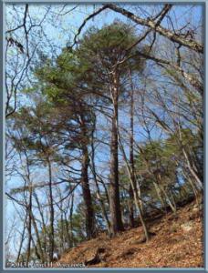 Apr26_036_Kawaguchi_TrailScenery_RC