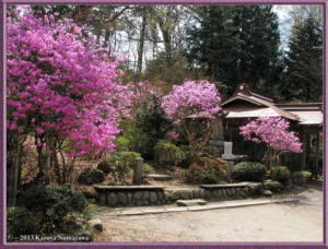April12th_Takamizu3Mtns209_RhododendronDilatatumRC